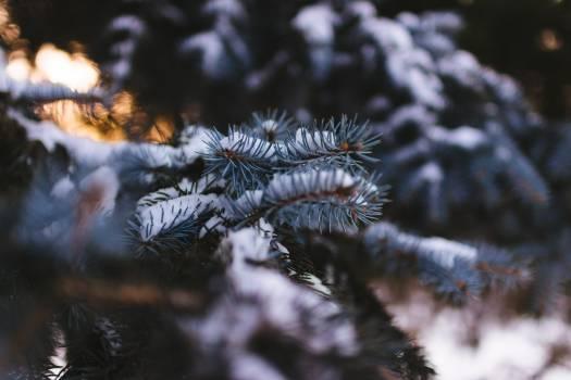 Snow winter plant leaves #41762