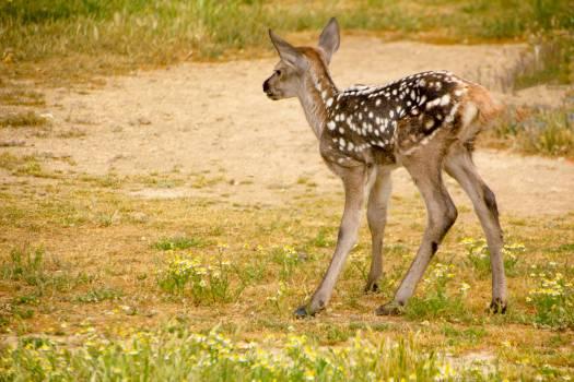 giraffe #417639