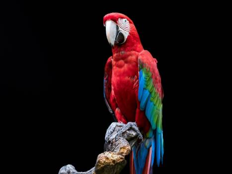 Macaw Parrot Bird #417655