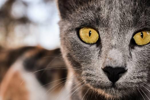 Cat Feline Kitten #417686
