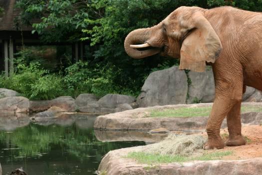 elephant #417691