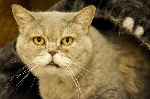 kitty #417716