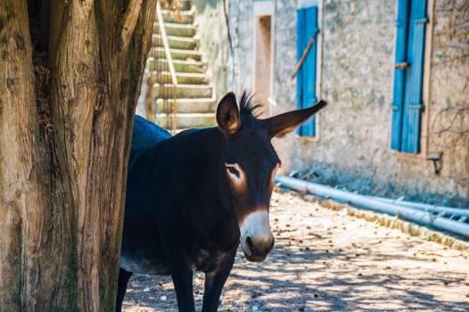 Horse Bull Farm #417718