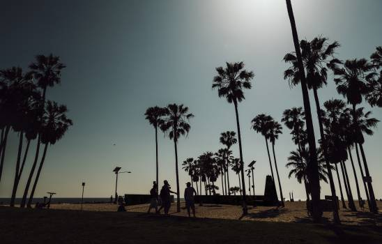 Palm trees on a Venice beach at California, USA #417905