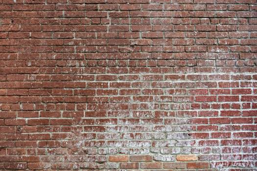 Grunge red brick wall background #417919