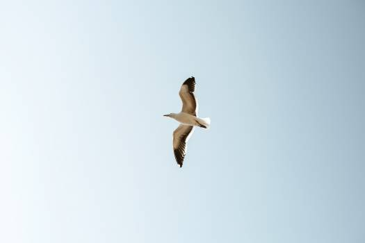 Seagull flying over in the blue sky #417962