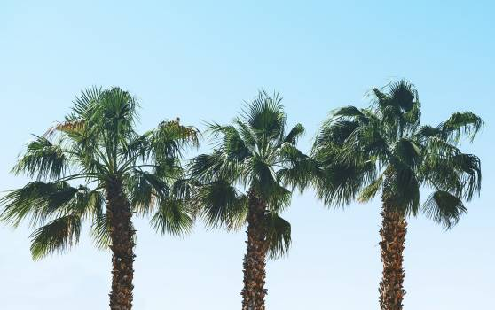 Palm trees in the summer #417963
