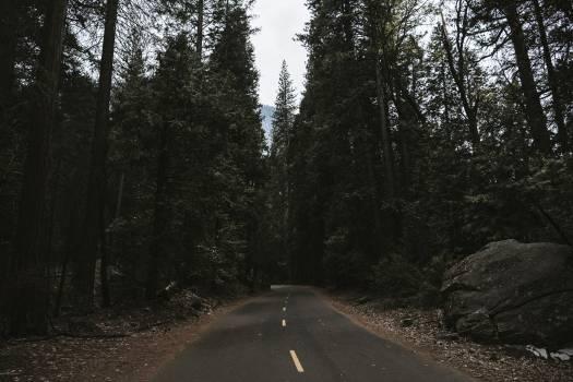 Road in Yosemite National Park at California, USA #417971