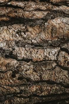 Brown detailed wooden textured background #417979