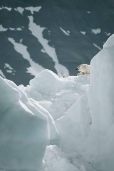 Ice Snow Glacier #417998