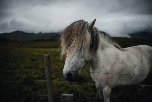 Horse Animal Horses #418000