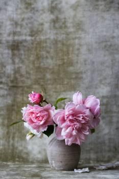 Pink Petal Flower #418125