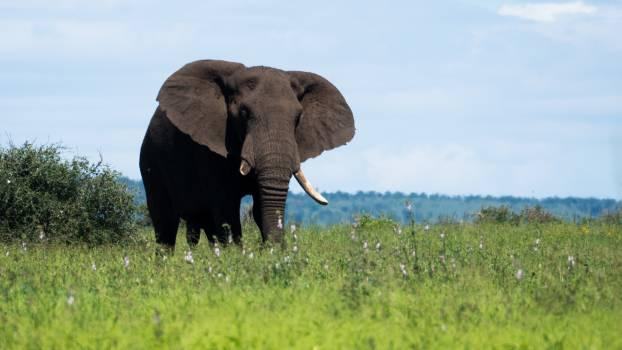elephant #418163