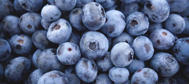 blueberry #418176