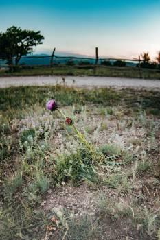 Grass Landscape Vascular plant #418202