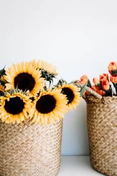 Sunflower Flower Vase #418207