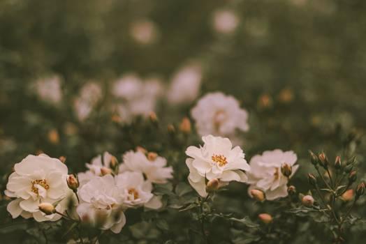Blossom Spring Flower #418261