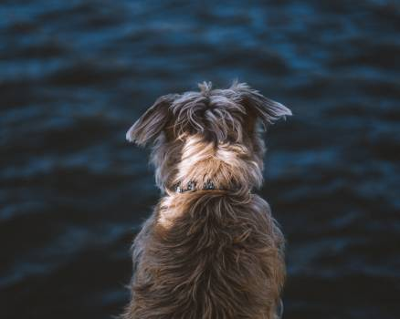 Terrier Hunting dog Dog #418268