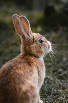 Hare Rabbit Mammal #418271