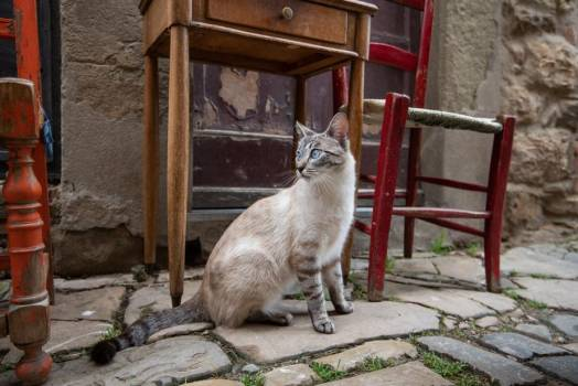 A Cat Chills By An Outdoor Table And Chairs #418331