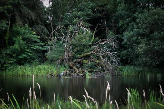 A Gnarly Tree By The River Shelters A Heron #418346