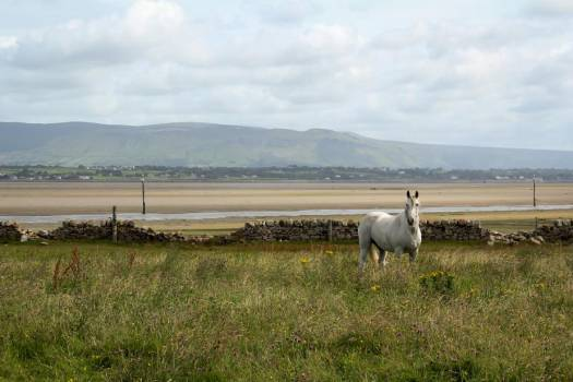 A White Horse In A Field Walled Off From A  Beach #418349