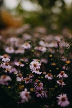 Herb Flower Plant Free Photo