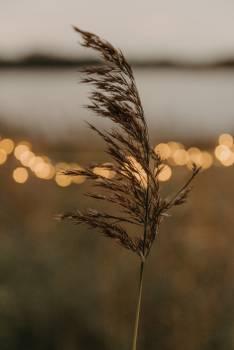 Wheat Sun Sky #418510