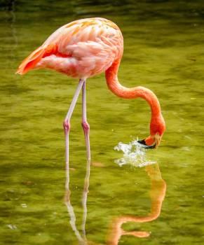 Flamingo Wading bird Aquatic bird #418556