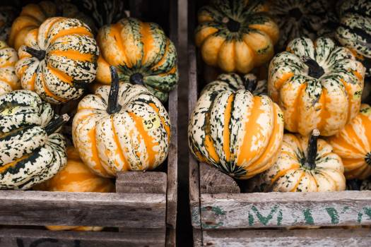 Pumpkin Squash Vegetable #418604