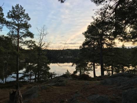 Tree Landscape Pine Free Photo