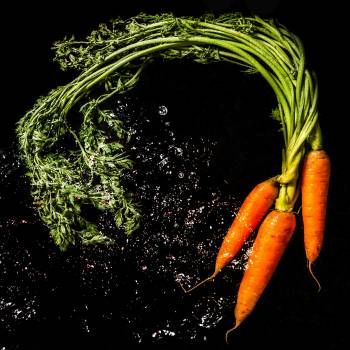 carrot #418639