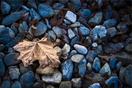 Rocks leaf  #418640