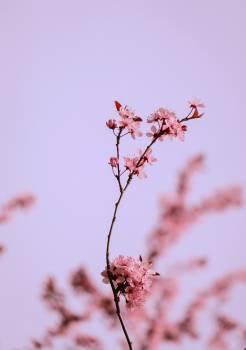 Tree Plant Branch #418666