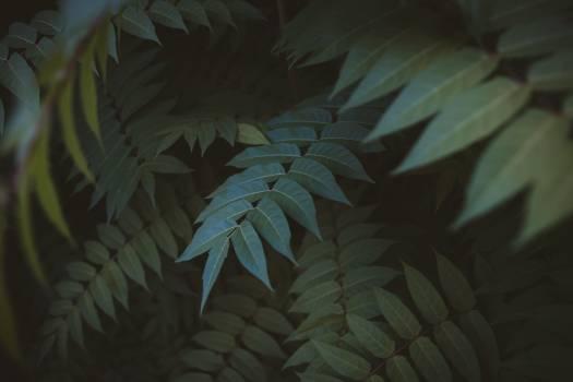 Plant Vascular plant Tree #418672