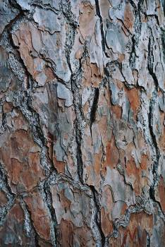 Bark Tree Rough #418729