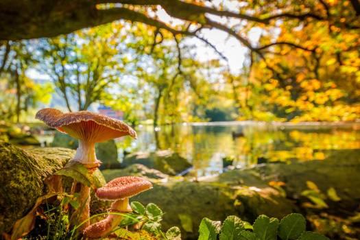 Tree Autumn Mushroom Free Photo