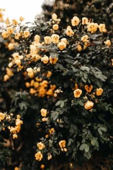 Vascular plant Shrub Gorse #418759