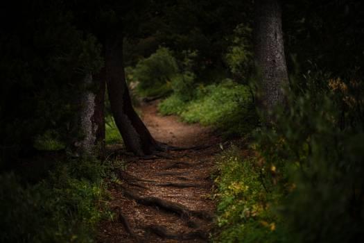Tree Forest Landscape Free Photo