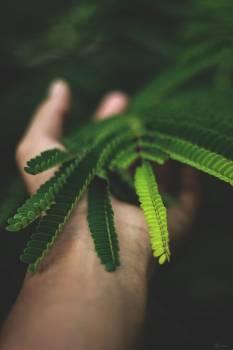 Leaf Plant Fern #418915