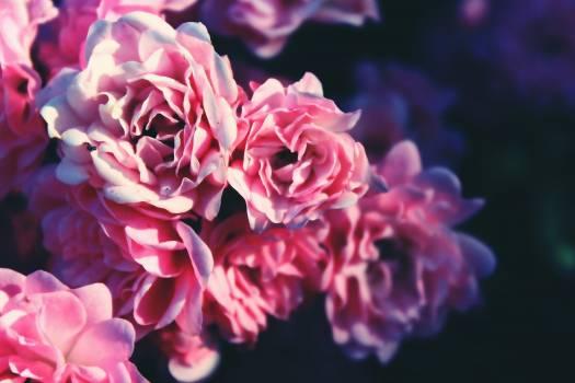 bouquet #419017