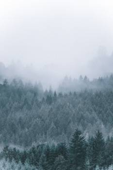Snow Forest Sky Free Photo