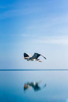 Jet Sky Flying #419070