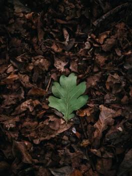 Plant Vascular plant Leaf #419120