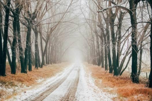 Landscape Snow Tree #419139
