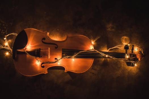 violin #419160