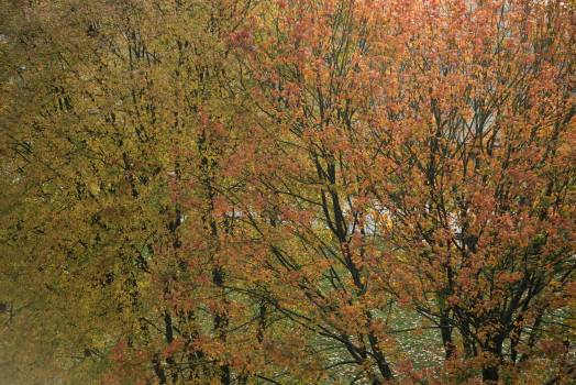 View of birch tree with orange leaves  Free Photo