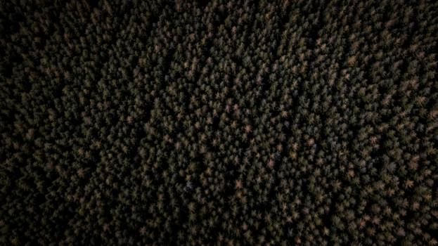 Honeycomb Texture Pattern Free Photo