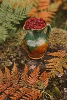 Pitcher plant Carnivorous plant Herb #419225