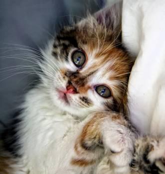 kitten #419280
